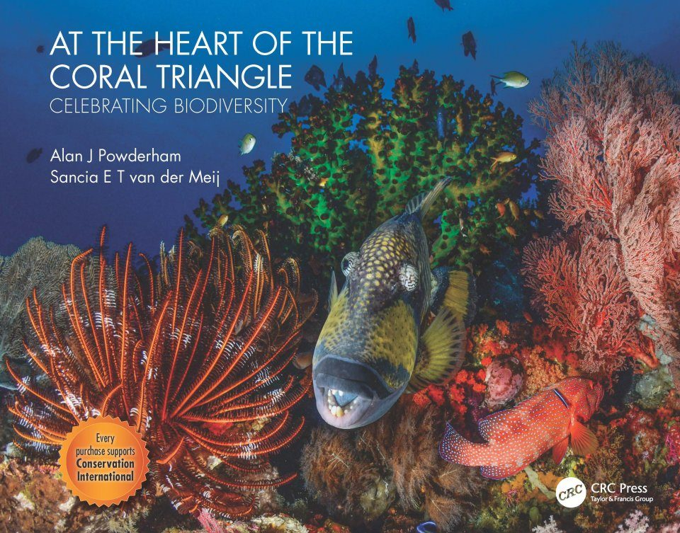 At the Heart of the Coral Triangle