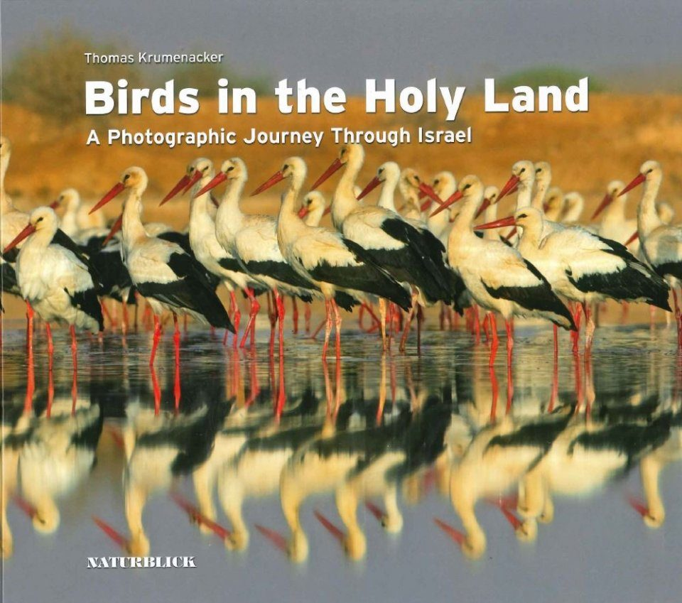 Birds in the Holy Land
