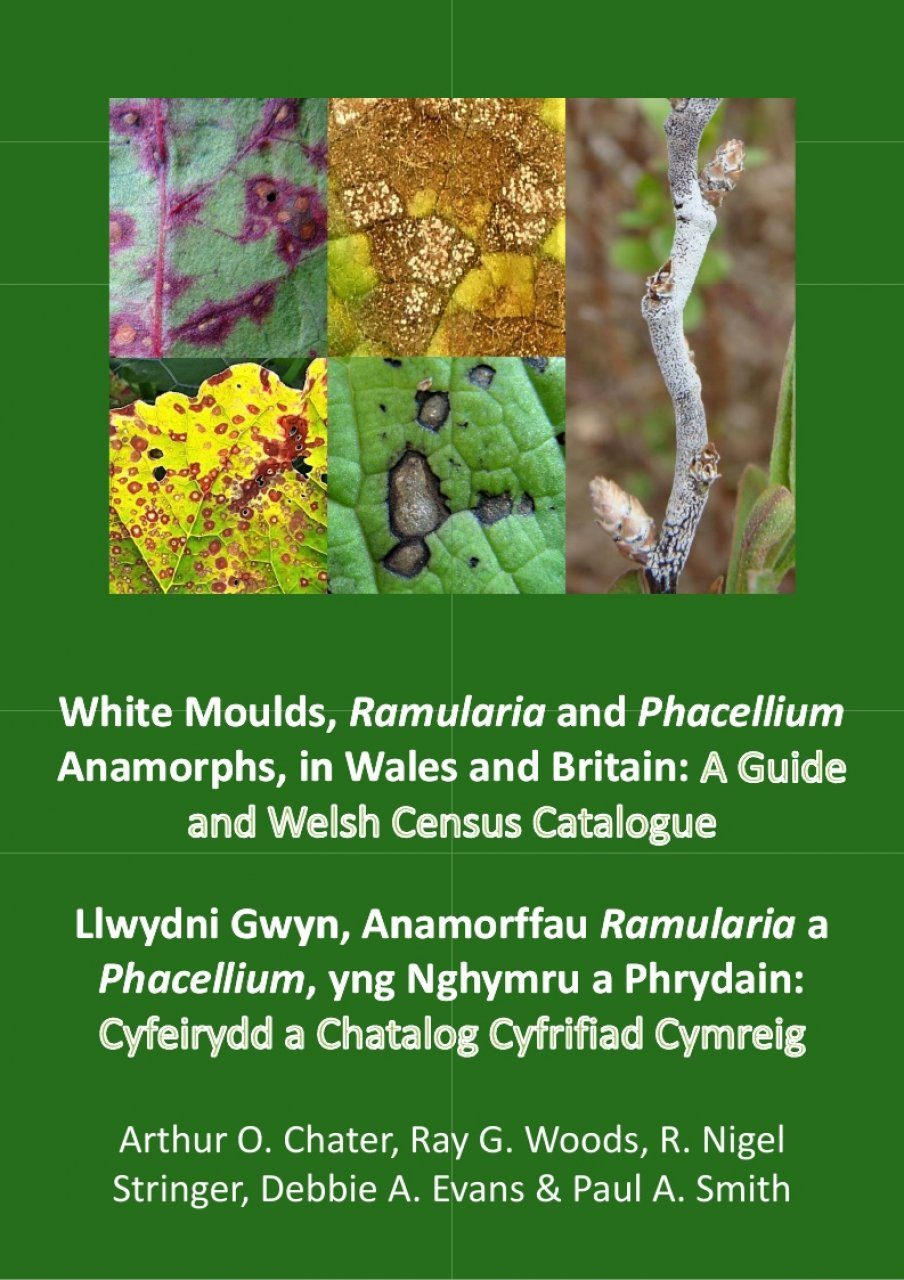 White Moulds, Ramularia and Phacellium Anamorphs in Wales and Britain