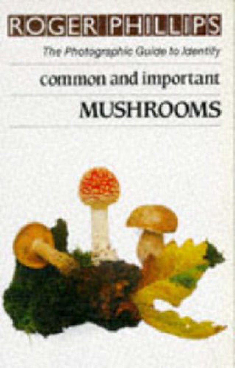 Common and Important Mushrooms
