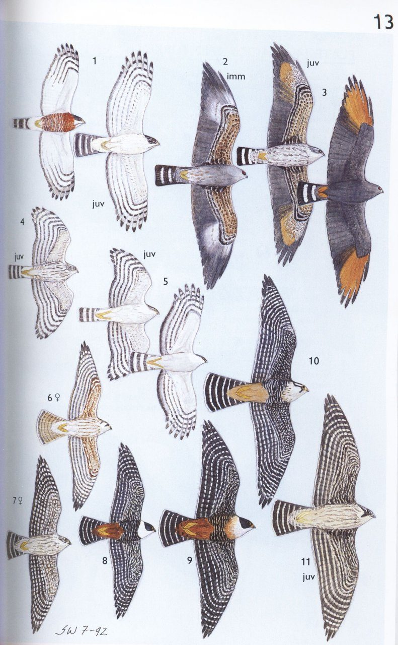 ... A Guide to the Birds of Mexico and Northern Central America ...
