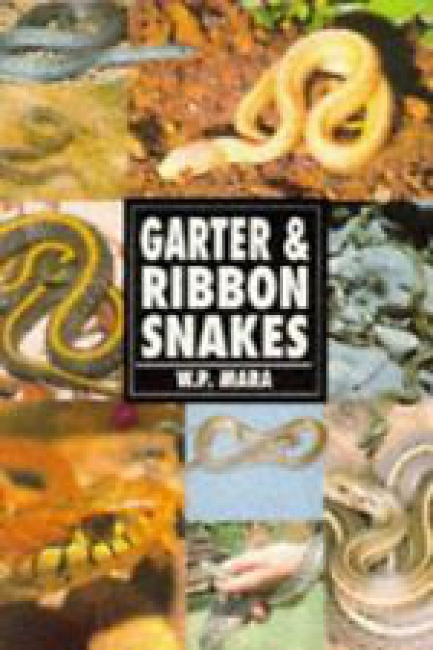 Garter and Ribbon Snakes