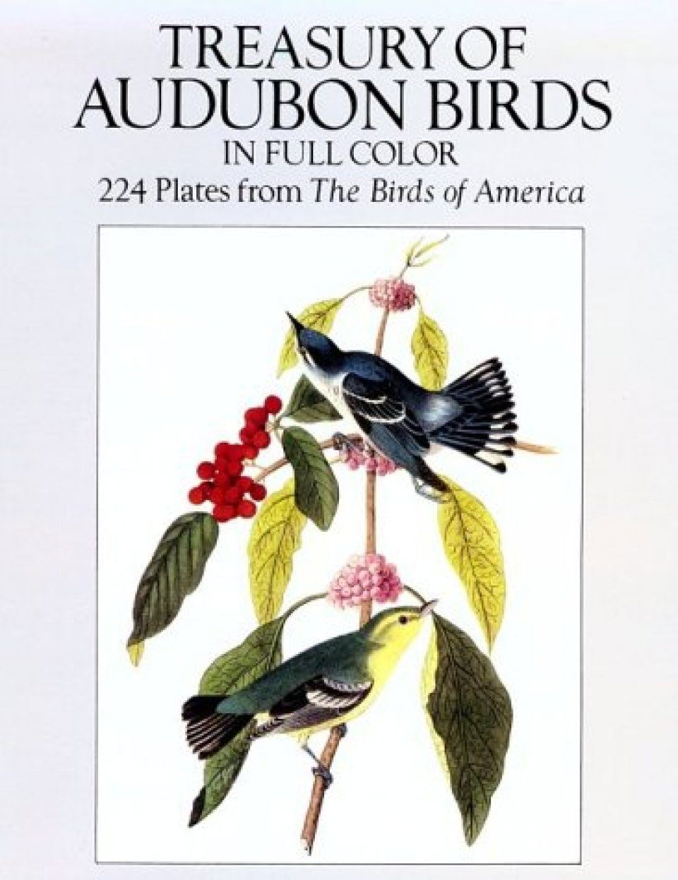 Treasury of Audubon Birds in Full Colour