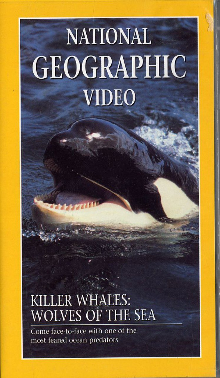 Killer Whales: Wolves of the Sea