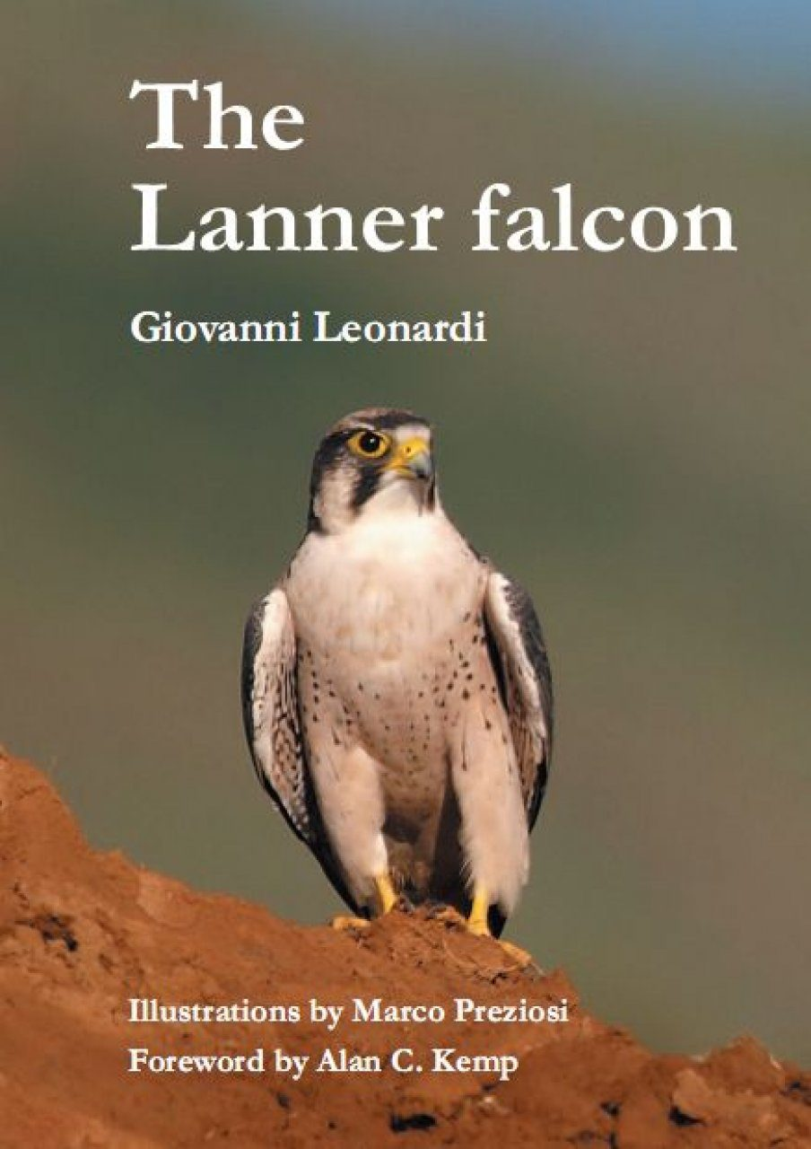 The Lanner Falcon