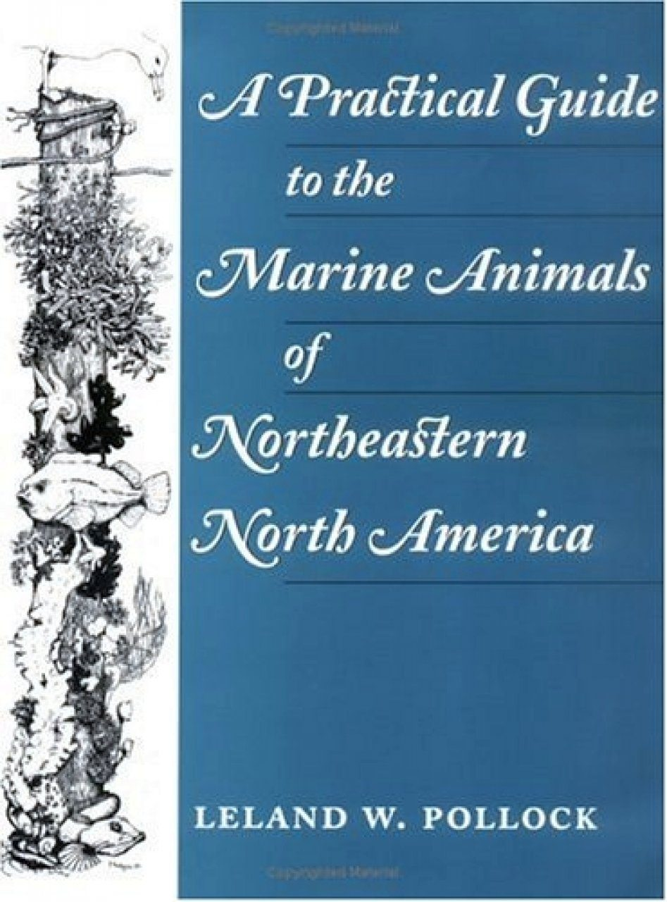 A Practical Guide to Marine Animals of Northeastern North America