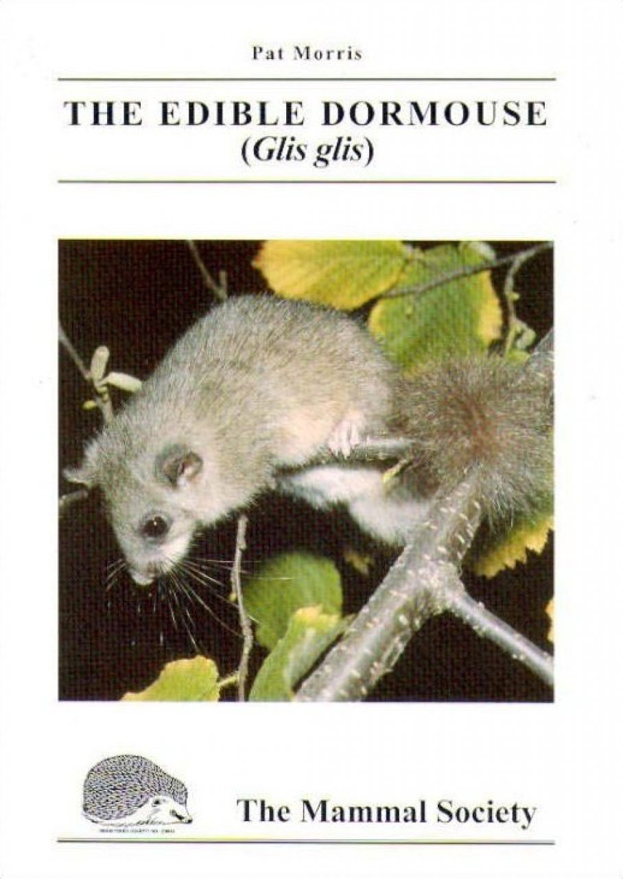 The Edible Dormouse (Glis glis)
