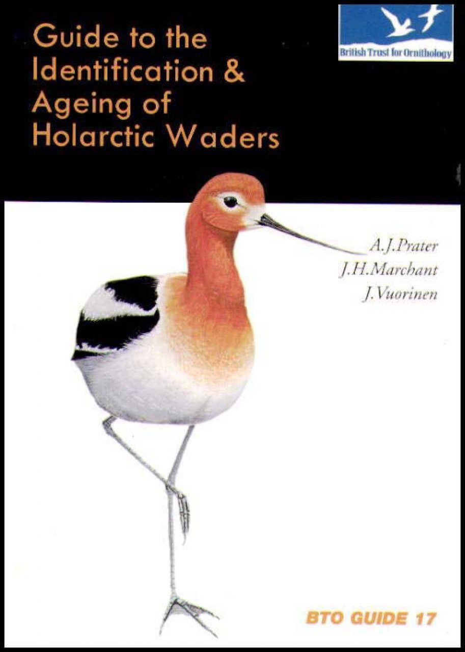 Guide to the Identification and Ageing of Holarctic Waders