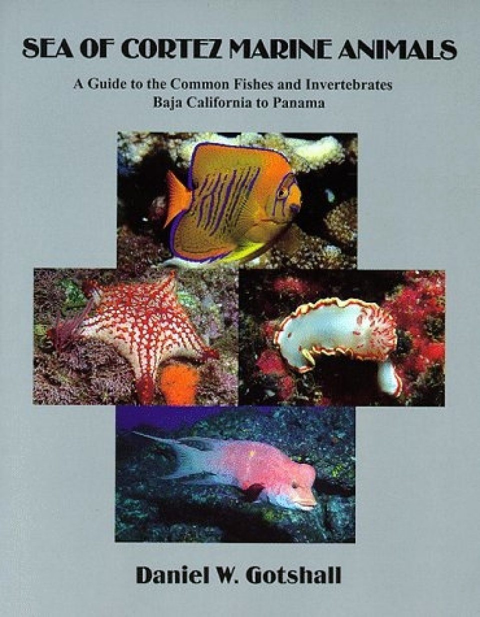 Sea of Cortez Marine Animals - A Guide to the Common Fishes and Invertebrates, Baja California to Panama