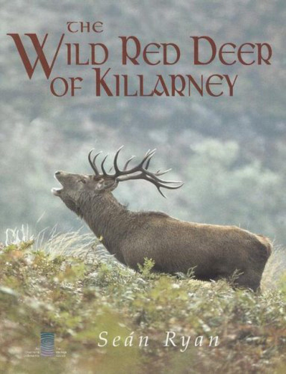 The Wild Red Deer of Killarney