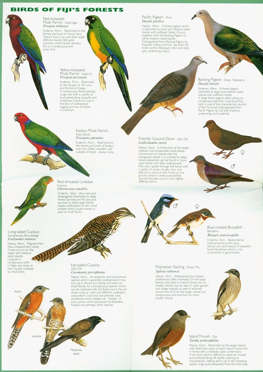 Pocket Poster Guide To The Birds Of Fiji